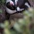 Penguin At My Feet