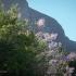 Kirstenbosch Flowering Bush #2