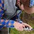 Measuring Catbird Tarsus