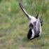 Chickadee in the Net