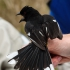 Towhee Protests