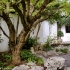 Maple in Scholar's Courtyard