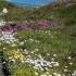 Flowers Near Cape Town