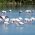 One Flamingo Stands Out
