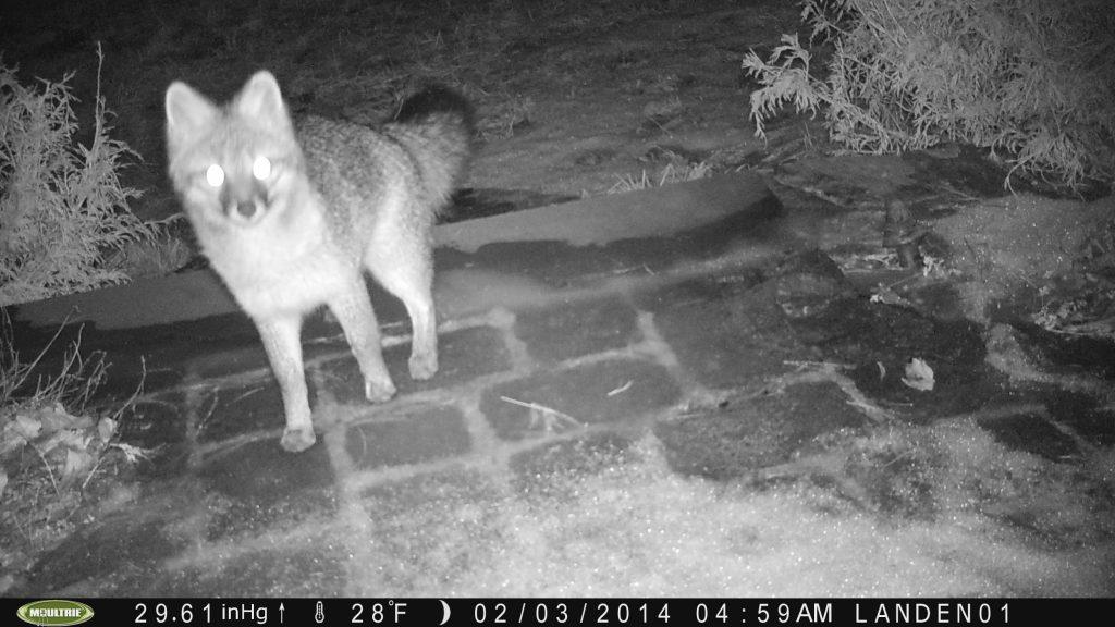 Nighttime Visitor