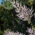 Kirstenbosch Flowering Bush #1