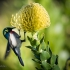 Southern Double-collared Sunbird Feeding